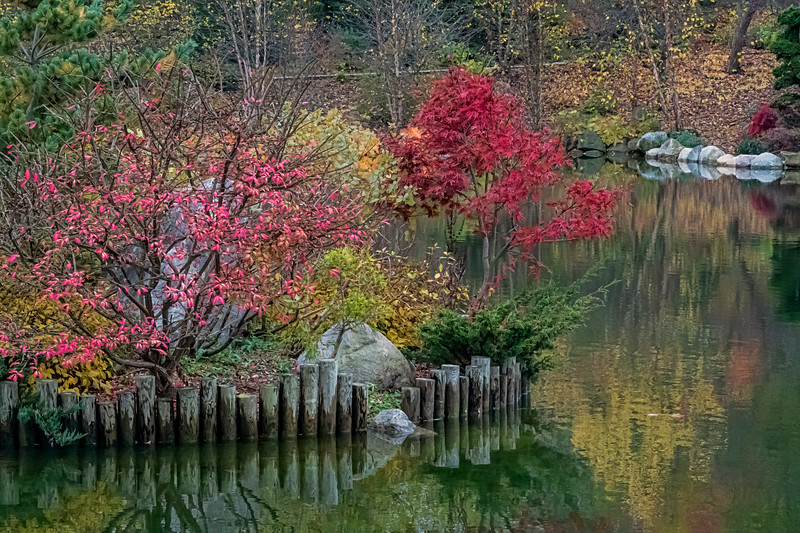Fall scene in the Japanese Garden