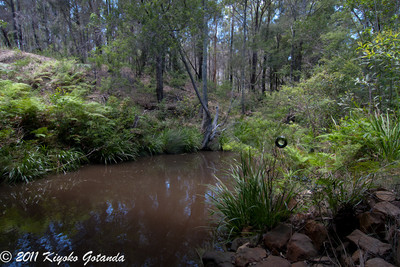 Matenga Creek