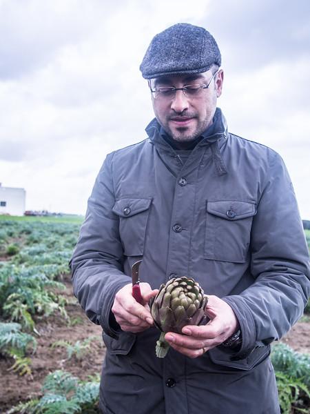 lillo artichoke 2-2.jpg