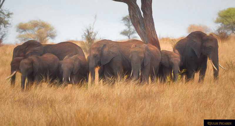 An Impressionistic View of Elephants in a Semi-circle