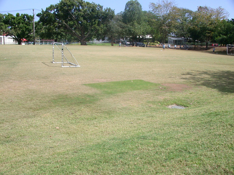 the ONE patch of healthy grass