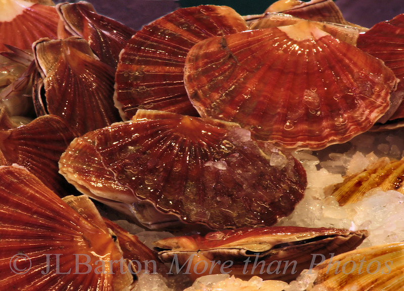 Scallops Fish Market