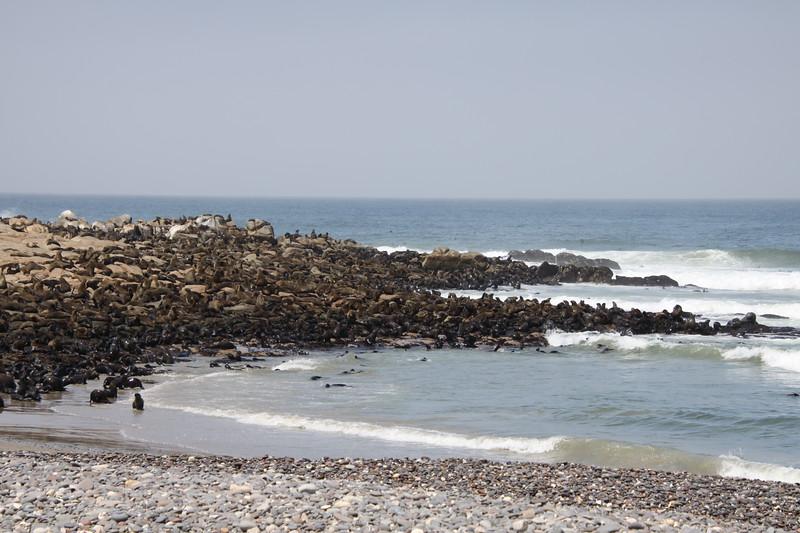 150,000 Cape Fur Seals