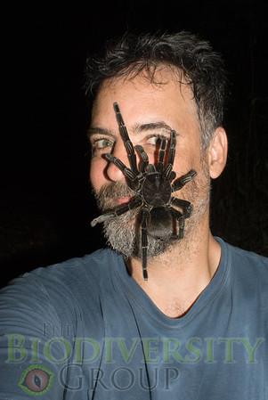Tarantulas on Faces