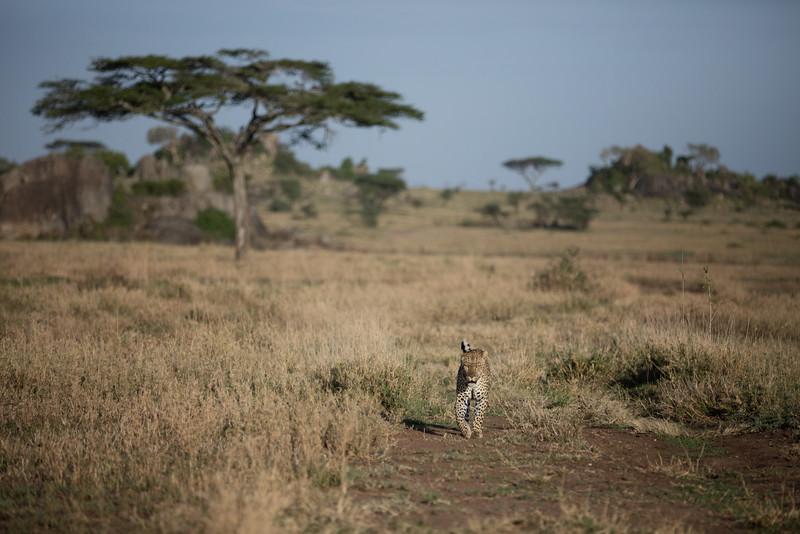 Africa - 101616 - 3739.jpg