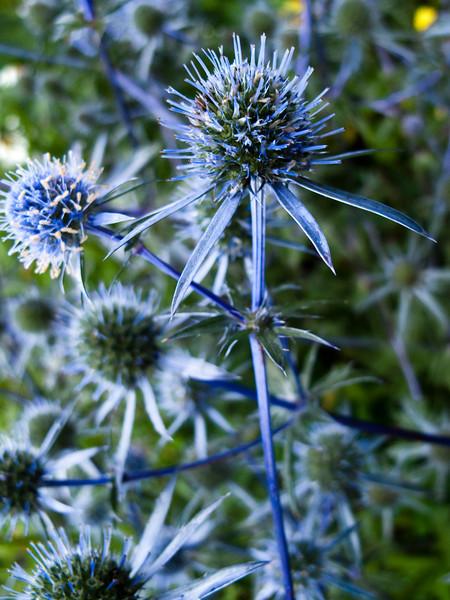 Tangled Blue
