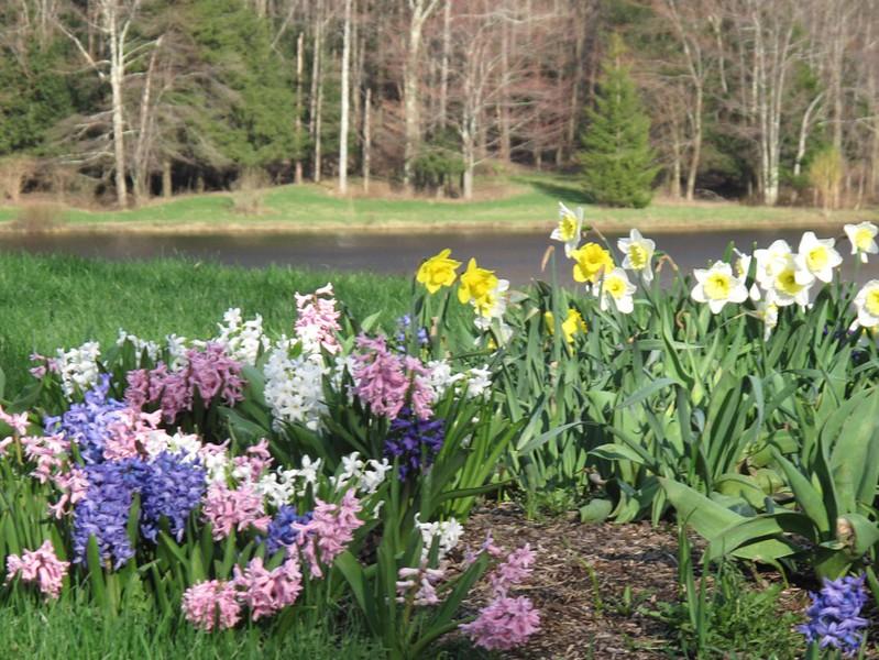 bckflowers.jpg