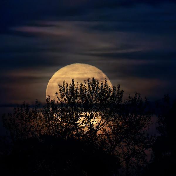 R7307813_DxO-Hunters-Moon.jpg