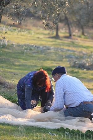 2011/11/16 Raccolta delle olive
