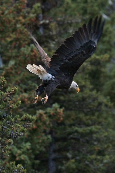 IMG_0317 eagle.jpg