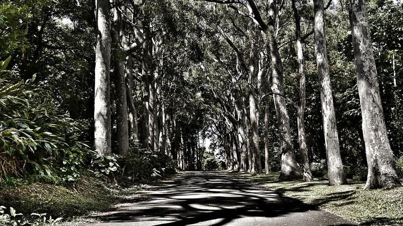 #5279 - Driveway