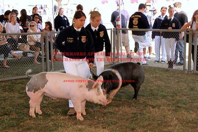 2014 LHVCF Swine