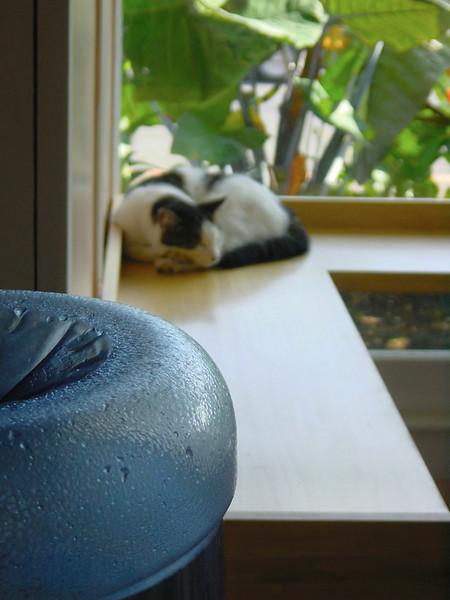Cat Sleeping on Window Shelf