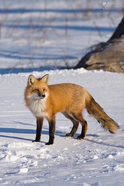 Wildlife (Vertical)