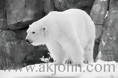 POLAR BEAR EXPANSION PRESS RELEASE