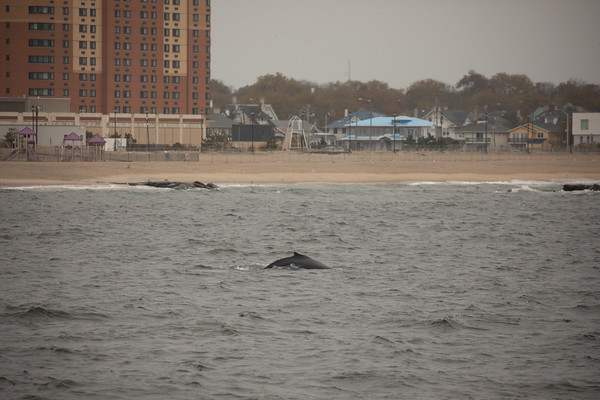 Jersey shore whale watch Oct 20-8.jpg