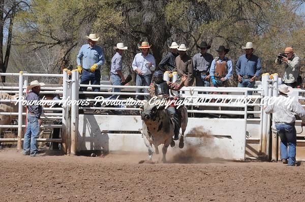 Perf Bulls