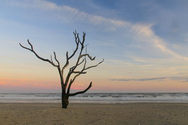 Edisto Tree 5.jpg