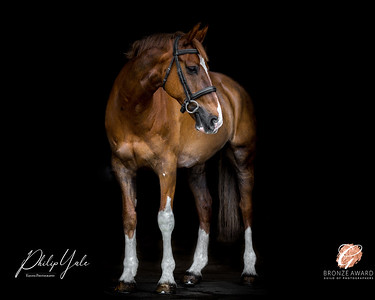 Equine Gallery -  Philip Yale Horse Photographer in Cheshire - Equine Portrait Gallery