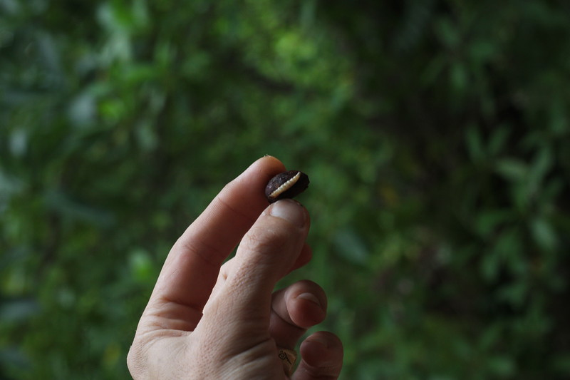 Cacao bean with fat white worm