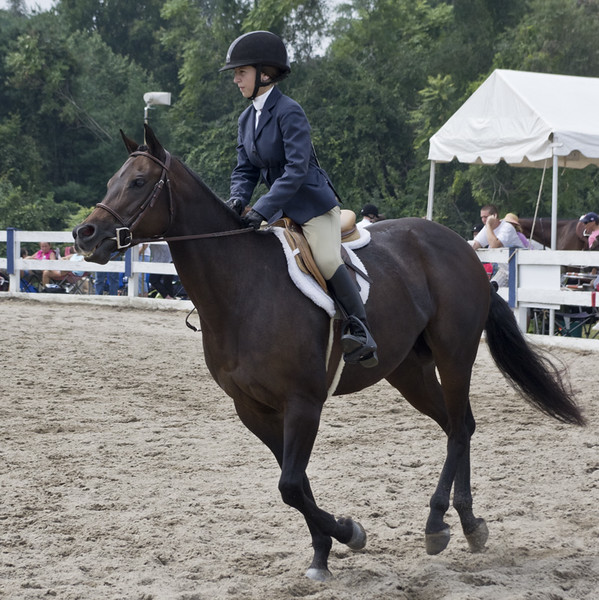 horseshow1-bobg_15_20141019_1694171257.jpg