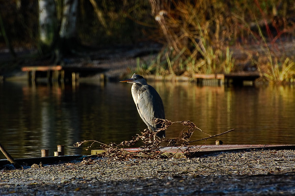 Duttons Pond 18/12/2009