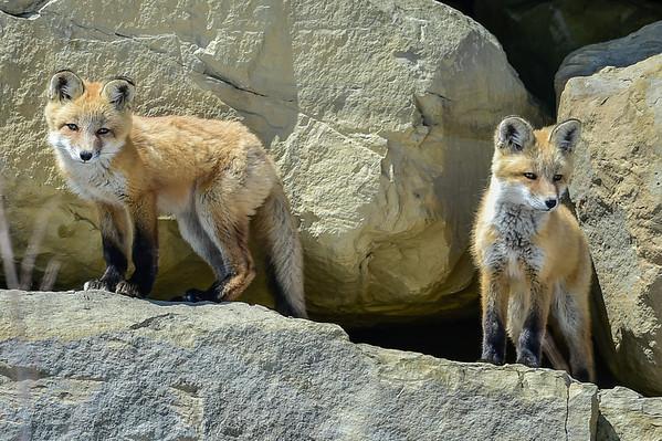 5-7-14 Fox Family