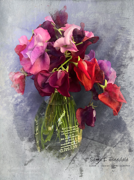 last of the sweet peas