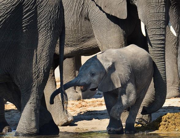 Okavango 2016 - Окаванго 2016
