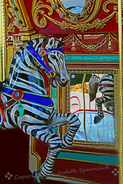Zebra of Another Stripe