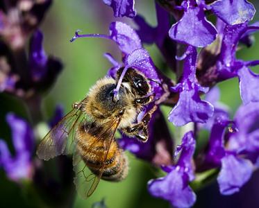 Bee Close Ups