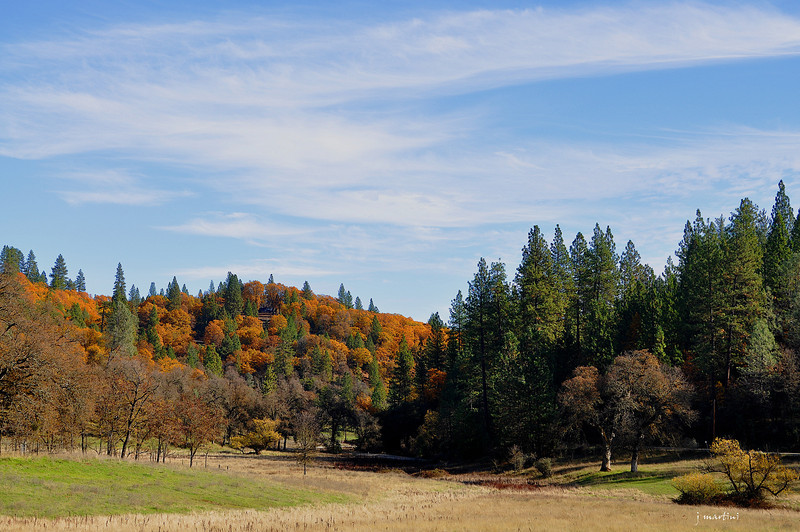 mixed forest 11-27-2012.jpg