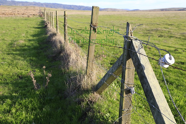 Fences, Cows and Manure PRNS