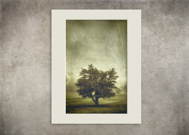 A Tree in the Fog 2 - $12
