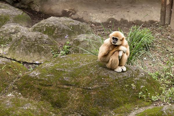 20160327木柵動物園遊