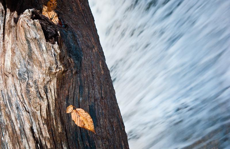 Crab Tree Falls-054.jpg