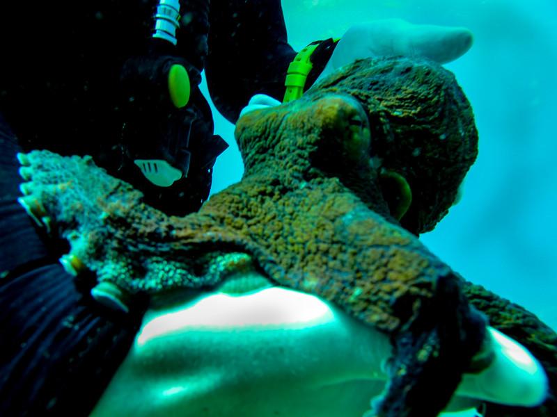 Hawaii diving - 133.jpg