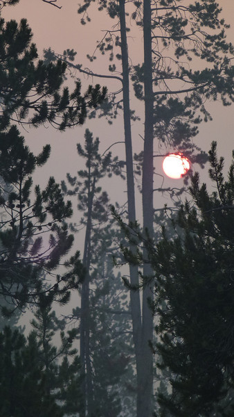 This could be a sunset pic but no it and 3 others are the rising sun thru smoke