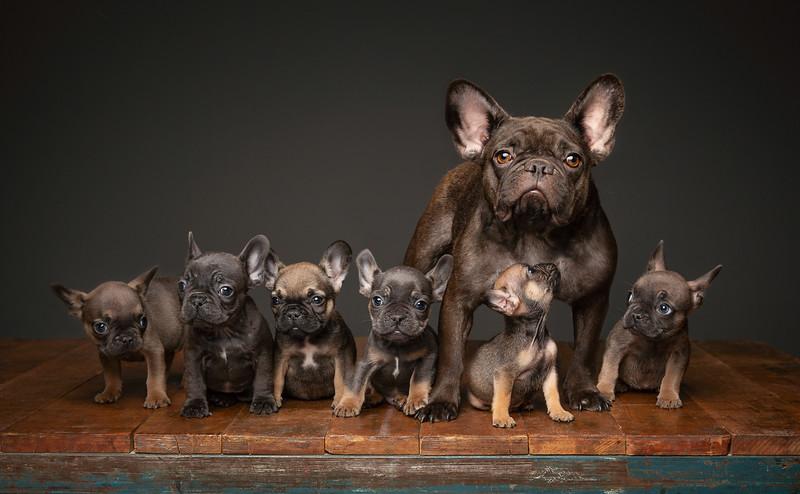 Pups-308-Edit-Edit.jpg