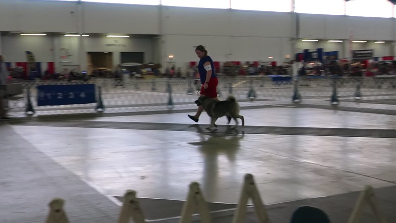 2019 July VIDEO only Dallas Dog Show