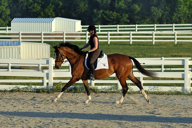 Horses July 2011 575a.jpg
