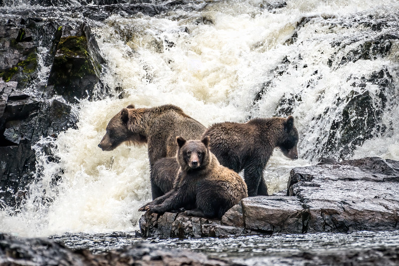 DSC 1023 bear family_d.jpg