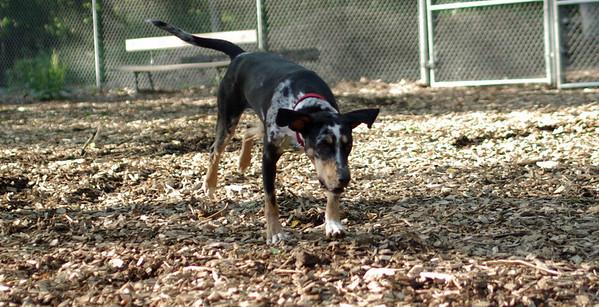 PICS JUNE 17::MILEY (new pup girl)