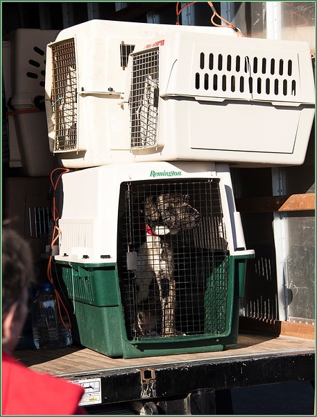 170218_1997 Edited Another dog in cage.jpg