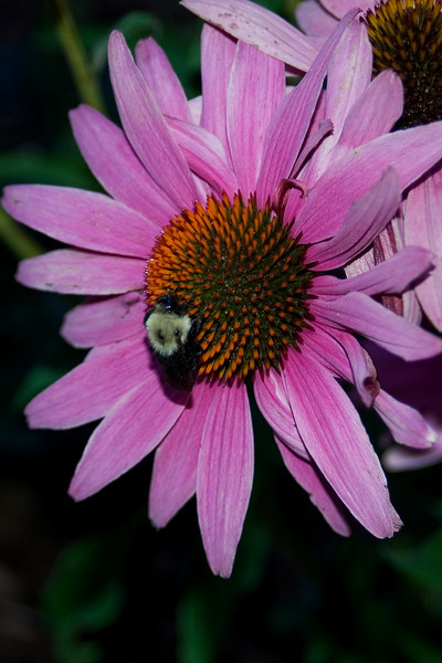 Bee and Flower 4.jpg