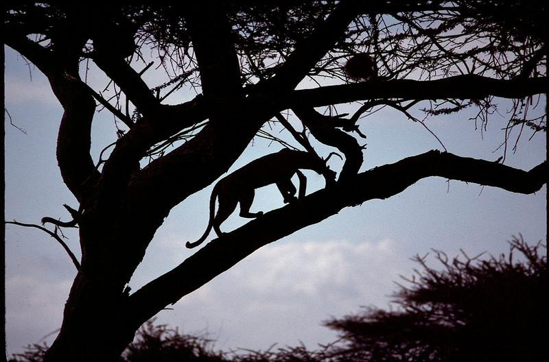 Kenya1_093.jpg
