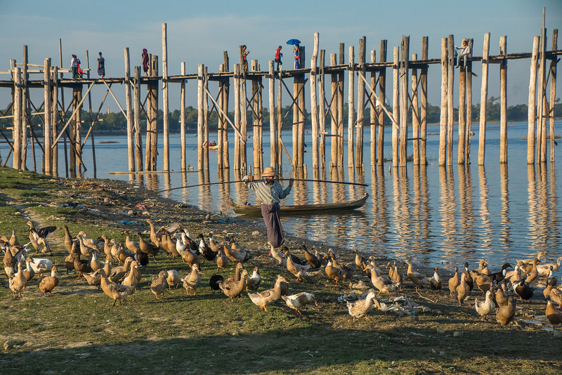 Duck farming near the U Bein Bridge south of Mandalay, Myanmar.
