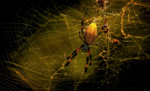 Spiders - The Arachnids.