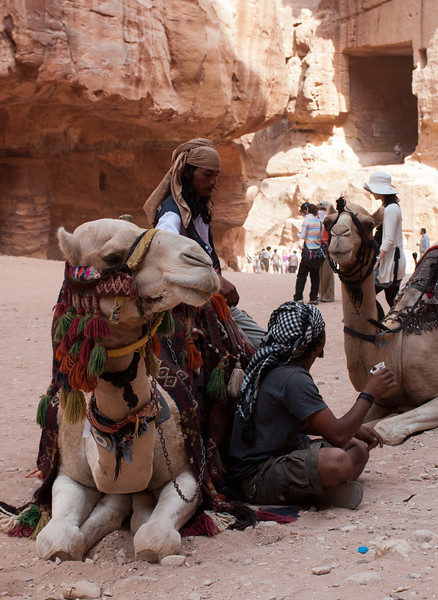 Bedouins and their Camels
