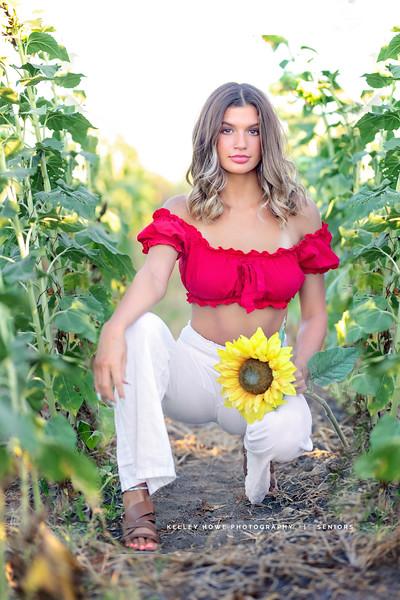Sunflower 0102b.jpg